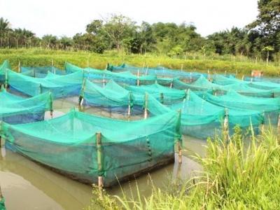 togo-un-pont-d-environ-90-metres-lineaires-sur-le-fleuve-zio-et-un-canal-d-irrigation
