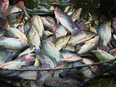 togo-les-importateurs-de-produits-halieutiques-invites-a-renouveler-leur-agrement-sanitaire
