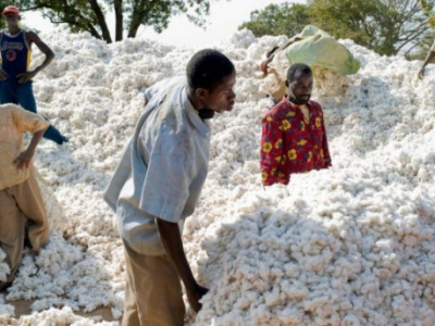 cotton-additional-xof35-kg-will-be-paid-to-farmers-for-the-2018-19-season